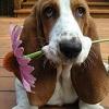 Viața de lux a câinelui Alunel